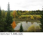 Осень. Лесное заболоченное озеро. Стоковое фото, фотограф Вера Попова / Фотобанк Лори