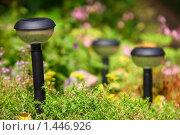 Купить «Садовые фонарики», фото № 1446926, снято 17 июля 2009 г. (c) Бельская (Ненько) Анастасия / Фотобанк Лори