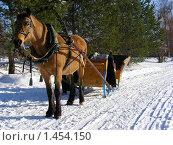 Купить «Лошадка», эксклюзивное фото № 1454150, снято 6 февраля 2010 г. (c) lana1501 / Фотобанк Лори