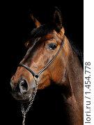 Гнедая лошадь. Стоковое фото, фотограф Екатерина Стрельникова / Фотобанк Лори