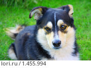 Собака на траве. Стоковое фото, фотограф Ольга Алиева / Фотобанк Лори