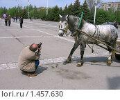 Город Волгодонск. Масленица. Лошадь позирует. (2007 год). Редакционное фото, фотограф Валерий Шевяков / Фотобанк Лори