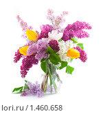 Купить «Букет с сиренью и тюльпанами на белом фоне», фото № 1460658, снято 28 мая 2009 г. (c) Елена Блохина / Фотобанк Лори