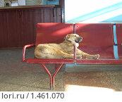 Собака в зале ожидания. Стоковое фото, фотограф Ирина Никитина / Фотобанк Лори