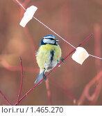 Купить «Лазоревка и кусочки сала на нитке», фото № 1465270, снято 15 марта 2009 г. (c) Max Toporsky / Фотобанк Лори