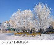 Гор. Волгодонск. Иней на деревьях. Стоковое фото, фотограф Валерий Шевяков / Фотобанк Лори