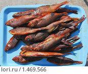 Купить «Копченая рыба», эксклюзивное фото № 1469566, снято 8 апреля 2009 г. (c) Алёшина Оксана / Фотобанк Лори