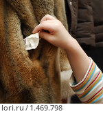 Купить «Домашний карманник», фото № 1469798, снято 12 февраля 2010 г. (c) Марьичева Марина / Фотобанк Лори