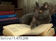 Купить «Кот читает книгу», фото № 1473206, снято 21 февраля 2019 г. (c) Namanoman / Фотобанк Лори
