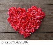 Купить «Цветы в форме сердца», фото № 1477586, снято 9 сентября 2007 г. (c) Сергей Кандауров / Фотобанк Лори