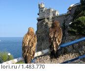 Купить «Ласточкино гнездо», фото № 1483770, снято 5 сентября 2009 г. (c) Татьяна Злобина / Фотобанк Лори