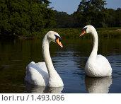 Купить «Два белых лебедя», фото № 1493086, снято 8 августа 2009 г. (c) Максим Горпенюк / Фотобанк Лори