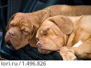Семейная пара. Стоковое фото, фотограф EtoileDeChemin / Фотобанк Лори