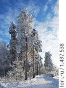 Купить «Сосновая аллея», фото № 1497538, снято 24 января 2010 г. (c) Татьяна Савватеева / Фотобанк Лори