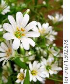 Полевые цветы крупным планом. Стоковое фото, фотограф Багира / Фотобанк Лори