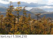 Осенний лиственничный лес. Магаданская область. Стоковое фото, фотограф Александр Мягков / Фотобанк Лори