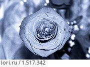 Фотография в ультрафиолетовых тонах. В том числе и роза. Вид сверху. Стоковое фото, фотограф Евгений Мидаков / Фотобанк Лори