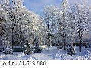 Деревья в инее. Стоковое фото, фотограф Елена Мурашева / Фотобанк Лори