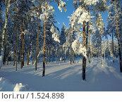 Зимний лес. Стоковое фото, фотограф Игорь Кононов / Фотобанк Лори
