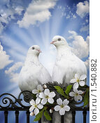 Купить «Вестники сердечной любви», фото № 1540882, снято 24 августа 2019 г. (c) Ольга Киселева / Фотобанк Лори