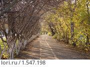 Боярышная аллейка. Стоковое фото, фотограф Дмитрий Степной / Фотобанк Лори