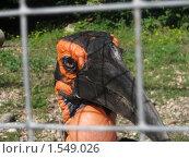 Купить «Голова птицы за сеткой», фото № 1549026, снято 26 августа 2009 г. (c) Виктор Юрасов / Фотобанк Лори