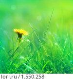 Купить «Одуванчик в траве», фото № 1550258, снято 19 мая 2007 г. (c) Алена Роот / Фотобанк Лори