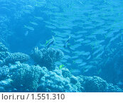 Подводный мир. Стоковое фото, фотограф Ирина / Фотобанк Лори