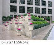 Купить «Улица Сан-Франциско, украшенная цветочными вазами», фото № 1556542, снято 2 февраля 2008 г. (c) Валентина Троль / Фотобанк Лори