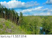 Купить «Небо над сосновым бором», фото № 1557014, снято 8 мая 2008 г. (c) Владимир Блинов / Фотобанк Лори