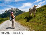 Купить «Девушка и корова в Альпах», фото № 1565570, снято 13 августа 2009 г. (c) Петр Кириллов / Фотобанк Лори