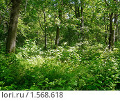 Купить «В лесу», фото № 1568618, снято 3 июня 2009 г. (c) Бондарь Александр Николаевич / Фотобанк Лори