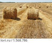 Купить «Уборка пшеницы закончена.Скатывание соломы в рулоны», фото № 1568786, снято 12 июля 2009 г. (c) Бондарь Александр Николаевич / Фотобанк Лори
