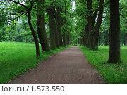 Купить «Аллея в парке», фото № 1573550, снято 27 июля 2009 г. (c) Николай Богоявленский / Фотобанк Лори