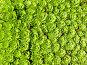 Ковер из травы, фото № 1574674, снято 28 июля 2009 г. (c) Катерина Макарова / Фотобанк Лори