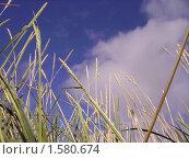 Зелень. Стоковое фото, фотограф sfsfs / Фотобанк Лори