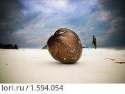 Кокос. Стоковое фото, фотограф Дмитрий Краснов / Фотобанк Лори