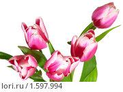 Купить «Букет праздничных тюльпанов», фото № 1597994, снято 17 февраля 2010 г. (c) Юрий Брыкайло / Фотобанк Лори