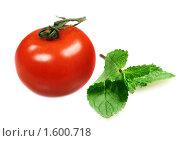 Купить «Помидор и листик свежей мяты для салата», фото № 1600718, снято 7 августа 2009 г. (c) ElenArt / Фотобанк Лори