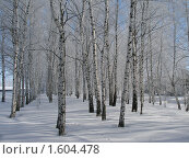 Купить «Березы в инеи на фоне голубого неба», фото № 1604478, снято 18 марта 2010 г. (c) Минакова Татьяна / Фотобанк Лори