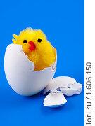 Игрушечный цыпленок в скорлупе. Стоковое фото, фотограф Александр Евсюков / Фотобанк Лори