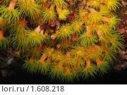 """Ночные """"цветы"""" Стоковое фото, фотограф Нина Гурвич / Фотобанк Лори"""