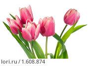 Купить «Букет тюльпанов на белом фоне», фото № 1608874, снято 17 февраля 2010 г. (c) Юрий Брыкайло / Фотобанк Лори