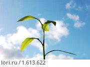 Купить «Зеленый росток на фоне неба», фото № 1613622, снято 29 сентября 2009 г. (c) Роман Родионов / Фотобанк Лори