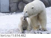 Купить «Медвежонок и медведица», фото № 1614482, снято 11 марта 2010 г. (c) Яременко Екатерина / Фотобанк Лори