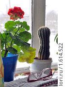 Купить «Цветы на окне», фото № 1614522, снято 4 апреля 2010 г. (c) Александр Кокарев / Фотобанк Лори
