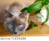 Кошка и цветок. Стоковое фото, фотограф Ирина Никитина / Фотобанк Лори