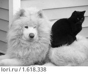Чёрное на белом. Стоковое фото, фотограф Iv Merlu / Фотобанк Лори