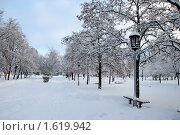 Зимний парк. Стоковое фото, фотограф владимир самохин / Фотобанк Лори