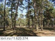 Купить «Сосновое редколесье», фото № 1620374, снято 11 апреля 2010 г. (c) Александр Шилин / Фотобанк Лори